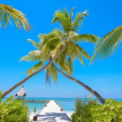 Wanddoek-Beach-Palmtree